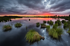 Stormy sunset on the lake (NicVW) Tags: light sunset red wild summer orange cloud sunlight lake reflection green nature water beautiful grass clouds forest landscape outdoors evening countryside sundown belgium horizon ardennes scenic dramatic nobody surface calm reflect fagnes