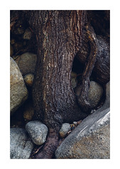(MOKI RIM) Tags: abstract macro tree texture utah little sony unity canyon cottonwood granite meditation nikkor root 55 a7r