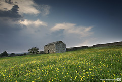 Buttercup meadow, Wensleydale, Yorkshire Dales National Park, England UK (Wend's photography) Tags: atmosphere britain clouds dales england flowers gb barn northyorkshire national park photography rural field buttercups summer summertime english wensleydale scenery landscape uk unitedkingdom