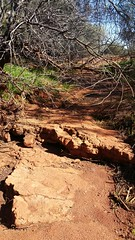rocky path to adventure (ClareSnow) Tags: rock redrock reddirt outback arid mulgacountry mulgascrub cue australia winter