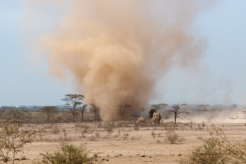Sand devil and camels, Ethiopia