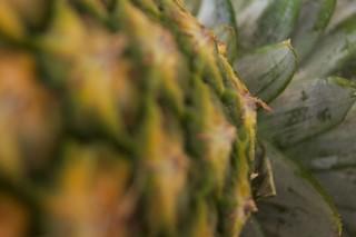 Pineapple 174/366