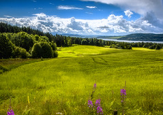 Beauty around the corner (#Explored 16-08-2016) (wimvandemeerendonk, back home) Tags: norway ringsaker valley hills hill lake sun bright blue contrast color colors colours colour clouds cloud flower green heaven landscape light mountain minolta nature outdoors outdoor panorama sony sky view wimvandem wild meadow