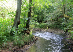 51-IMG_5085 (hemingwayfoto) Tags: bach dssel fluss geologie laubwald naturschutzgebiet tal wanderung