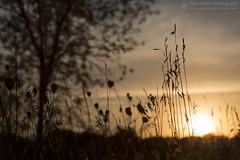 Summer Heat (right2roam) Tags: nebraska summer warm hot heat heatwave sunset prairie plains midwest omaha nealewoods fontenelleforest natureassociation right2roam silhouette