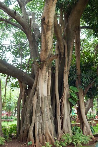 Bengaluru 2016 - Indira Gandhi Musical Fountain Park - DSC07664.jpg