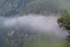 IMG_0522 (panjisukmo_atmojo) Tags: tebingkeraton tebing keraton bandung jawabarat canon canon1100d eos visitbandung pesona indonesia