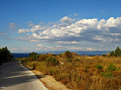 On the road to Mytilene...Lesbos Greece (panoskaralis) Tags: road green trees pine nature clouds sea seaside shore coast bluesky sky bluesea plants lesbos lesvosisland lesvos island mytilene greece greek hellas hellenic summer greeksummer summerholidays holidays aegean aegeansea