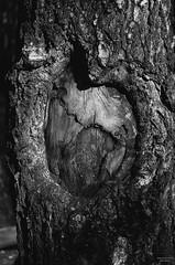 a heart (VelannaRay) Tags: tree portrait nature inner landscape wonder monochrome bw black mood outdoor wood forest     film