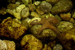 Little Octopus (Vojinovic_Marko) Tags: animal water octopus hobotnica parga greece grka hellas sea outdoor nikon d7200 animalplanet