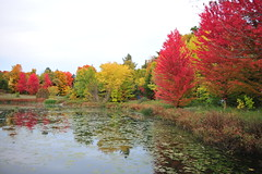 Autumn Glamour (AZ Imaging) Tags: maple red markham ontario water pond zen travel dream azimaging canada beauty