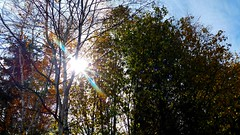 Fall sunlight. (thnewblack) Tags: lg g5 android smartphone cameraphone outdoors nature fall sunflare