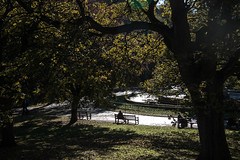 Princes Street Gardens Silhouette (m.o.n.o.c.h.r.o.m.e.) Tags: autumn sitting foliage edinburgh princesstreetgardens princesstreet man silhouette bench trees scotland