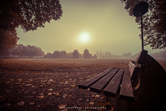 Autumn Sun (fotos_by_toddi) Tags: rot fotosbytoddi voerde niederrhein nrw nordrhein westfalen wolken sony sonya7 sun sky bume baum tree herbst herbstlich outdoor pflanze lights licht light lichter sonne a7 alpha7 autumn nebel deutschland germany