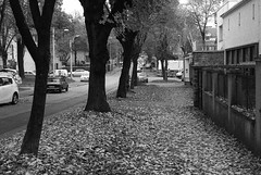 Autumn #3 (Misko78) Tags: street autumn blackandwhite bw film 35mm nikon grain push 135 nikkor nikonfa selfdeveloped orwo n74 nikkor50mm14ai
