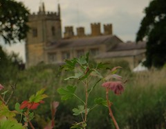The Church from the gardens (Dazzygidds) Tags: leaves textures nationaltrust warwickshire ukchurch