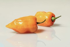 Golden Habanero () Tags: food vegetables chili peppers capsicum tabletop habanero canonefs60mmf28macrousm