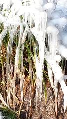 Eis im Sonnenschein  Februar 2015 im schönen Wiesental (saahiradancer) Tags: winter priska eis schwarzwald februar schopfheim 2015 nieke saahira