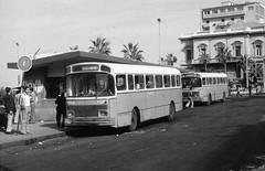 03_Alexandria - Bus Stop (usbpanasonic) Tags: alexandria mediterranean northafrica egypt busstop egypte مصر egyptians misr alexandrie masr egyptiens