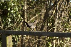 A bird on the Caerleon cycle path