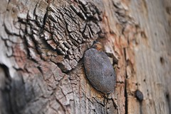 Vieja Puerta de Madera  - Old Wooden Door (i.puebla) Tags: barcelona door wood espaa spain puerta madera nikon catalonia catalua d60