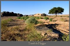 Algeria (denismartin) Tags: africa sahara algeria desert muslim maghreb algerie wste tuareg hoggar tamanrasset   tifinagh ahaggar tamazight tassiliduhoggar tagrera  denismartin  tinakacheker elghessour youfehaket tilenfezza tamanghasset tamenghest
