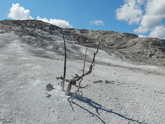 Mammoth Springs WY (FadingSun5) Tags: trip beautiful branches roadtrip pools yellowstone thermal wy mammothsprings
