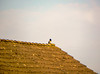 Bird On A Roof (Ashkan Kankash) Tags: blue roof sky favorite cloud bird nature colors beautiful beauty up wow photography photo nikon view shot fine excellent discover finegold lovelyphotos favoritesonly dazzlingshots
