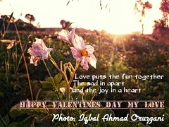 Happy Valentines Day (Iqbal Ahmad Oruzgani) Tags: afghanistan love emotion valentines care valentinesday kabul happyvalentinesday