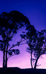 two sisters (pbo31) Tags: sanfrancisco california trees winter panorama color nature silhouette night sisters nikon purple earth january large panoramic twinpeaks bayarea stitched d800 2015 tankhillpark claradonheights