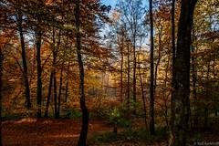 Painted Forest (ralf.kerkhoff) Tags: herbst jahreszeit natur bume botanik reken grossreken