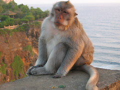 Macaque perched on the cliff