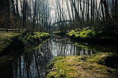 2015-03-07 06.00.11 1 (Timo Ma) Tags: canada river samsung swamp coquitlam s3 vscocam