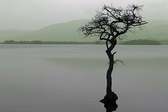 That Tree! (chrissyboys) Tags: tree balloch lochlomond milarrochybay