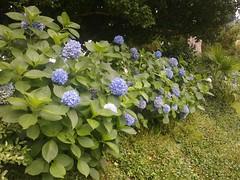 Botanical_Garden_Batumi (6) (Sasha India) Tags: travel georgia journey jardimbotnico botanicalgarden jardinbotanique batumi   gorgie excurso acara    adjara      botanikbahesi         grcstan        nbatatba          acarstan sfr