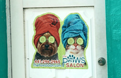 . (SA_Steve) Tags: bermuda cat dog funny spa cucumber sign