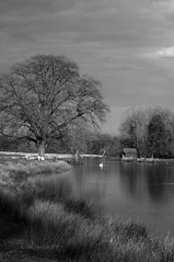 Evening on the Windrush (Richie Rue) Tags: summer blackandwhite monochrome rural river landscape outdoors mono evening countryside peaceful cotswolds pastoral riverbank windrush nikond300