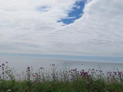 UK - Dorset - Near Studland - View into English Channel (JulesFoto) Tags: uk england dorset clog centrallondonoutdoorgroup studland studlandpeninsula englishchannel thistles