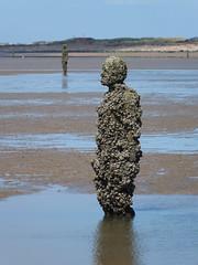 DSCF0735 (SierPinskiA) Tags: sea shells beach liverpool sand ironman pools barnacles ironwork mayday seashore merseyside anthonygormley irishsea 2016 anotherplace crosbybeach blundellsands fujixs1