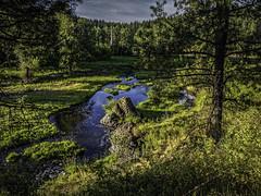 Morning along the Palouse River (keith_shuley) Tags: trees river washington stream palouse easternwashington palouseriver olympusomdem1