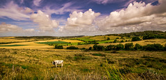 king of the hill (t.boelaars) Tags: clouds landscape cow colorfull wolken hills bergen landschap koe landschappanorama wolkenlandschap