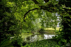 Diest 300716 16 (David Vanthienen) Tags: walk natu hike walking city stad diest hiking wandelen wandeling dieststadcitywandelingwandelenhikinghikewalkingwalknatuurnaturecitadelhalvemaandemerecocenterwarandebegijnhofbeguinage