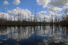Mirror in the water (StefanFritz) Tags: mirror speigel water lucht air sky clouds stefanfritz
