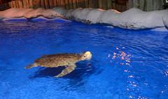 Projeto Tamar - Aracaj (isabelavistue) Tags: tamar tartaruga projetotamar turtle amo f aracaju sergipe