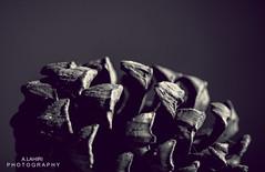 Symmetry (arkamitralahiri) Tags: india nature natural monochrome blackandwhite monotone pine pinecone pinus botany plants lightroom gymnosperm ecology garden macro varanasi