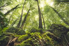 Look up (Miguel A. Garc) Tags: forest hayedo lafagedadenjorda girona gerona catalunya catalua spain espaa nikond600 nature bosque naturaleza naturallight shadows lightsandshadows