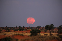 Moon Rises Above Kalahari (Henrik Schfer) Tags: sky moon mond rise aufgang mondaufgang moonrise kalahari desert wste bagatellle game ranch fullmoon volllmond red rot night dusk nightfall dmmerung