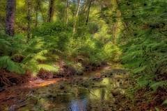 Bear Valley creek (gwashley) Tags: california marin pointreyes bearvalley creek