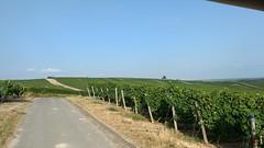 Mit dem Winzerexpress zur Weinprobe