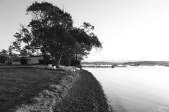 0D6A2772 - the waters edge (Stephen Baldwin Photography) Tags: boats tree water lake macquarie foreshore yatchs house grass landscape nsw australia